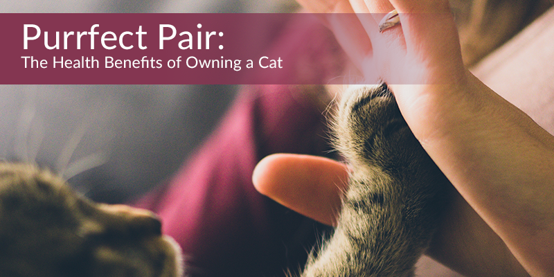 Purrfect Pair_ The Health Benefits of Owning a Cat